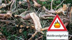 Германия регистрира рекордни загуби на горски масиви