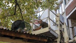 Хванаха еднометрова игуана на дърво в Стара Загора