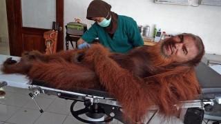 ВМРО праща Марешки при ветеринаря на столичния зоопарк