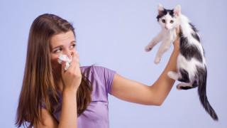 Ще има ли лек за алергията към котки