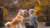 Кучетата, човешкият език, думите, звуците и разбират ли всичко, което им казваме