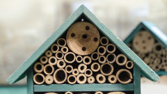 Къде зимуват насекомите