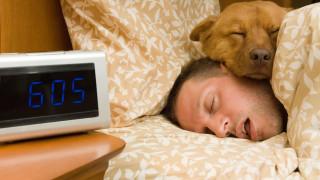Да пуснем ли кучето в леглото си