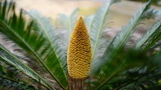 Растенията, които цъфтят за пръв път от 60 милиона години