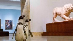 Когато пингвините се държат точно като хората