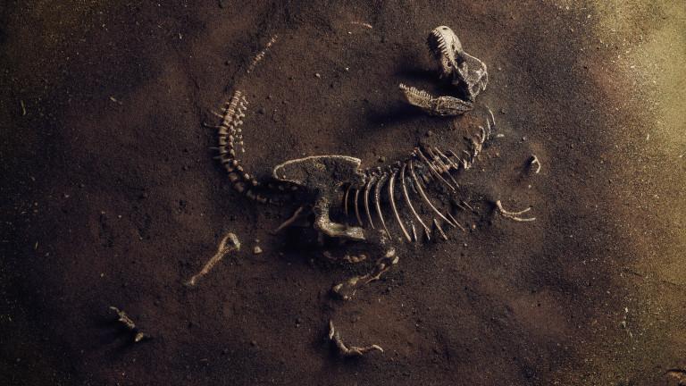 Скелет на тирекс се продаде за $32 милиона - най-скъпият динозавър, продаван някога на аукцион