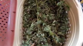 Хванаха 12 души за наркотици, оръжие и тротил в Новачене