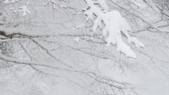 Извънредно положение в Сърбия заради силните снеговалежи