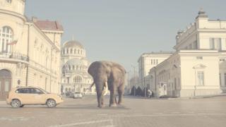 Кристо разходи слон и тигър по жълтите павета (ВИДЕО)