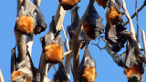 Климатичните промени изиграли ключова роля в коронавирус пандемията