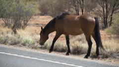 Безпризорен кон връхлетя върху кола на пътя