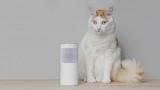 Amazon Alexa и за какво ползваме виртуалния асистент по време на пандемията
