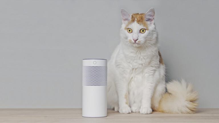 С какво ни помага Alexa по време на пандемията