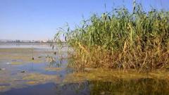 Зарибяват бургаското езеро Вая с 4 тона бял амур