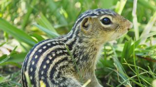 Как една катерица оцелява осем месеца без вода