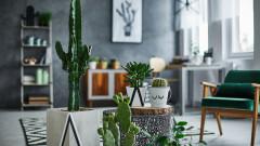 Растения с положителна енергия