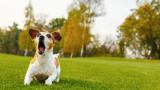 Как кучетата надушват лоши хора