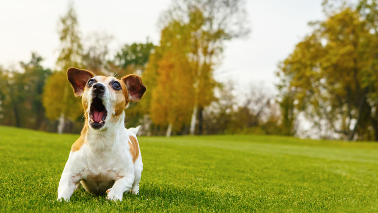 Всеки собственик на куче се е сблъсквал с конфузната ситуация