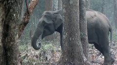 Слон в Индия пуши