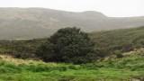 Нова Зеландия, остров Кембъл и кое е най-самотното дърво на света