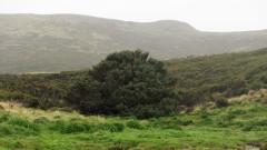 Най-самотното дърво на света
