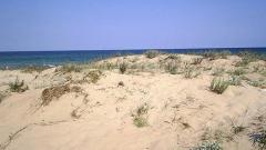 Държавата да защити дюните в Слънчев бряг, зоват природозащитници
