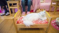 Котка малтретира пощальони