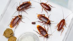 Да отгледаш 6 милиарда хлебарки и да печелиш по $20 от половин килограм насекоми