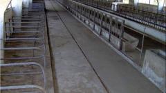 Животновъдните ферми се свили с 1/3 за година