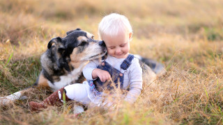 16 от най-подходящите породи кучета, ако имаме деца