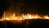 Близо 10 хиляди дка гори са горяли от началото на август