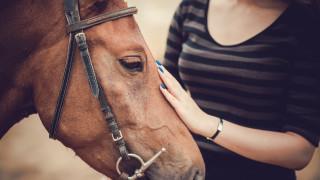 Европейски организации настояват за еврокомисар по хуманно отношение към животните