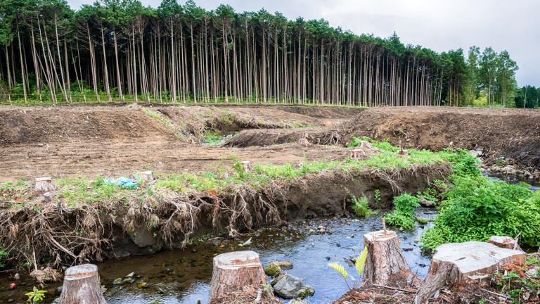CO2 кара дърветата да живеят бързо и да умират млади