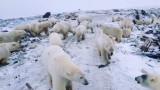 От космоса Русия брои мечките в Арктика
