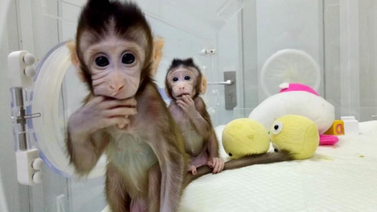 Китай създаде първите клонирани маймунки