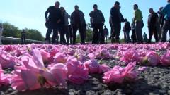 Държавата дава пари, но при спорни условия, а розопроизводителите са бесни