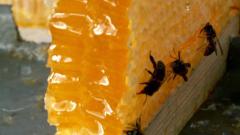 В България се произвеждат годишно от 8 000 до 11 000 тона мед