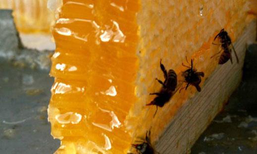 Фестивал на мановия мед в Царево