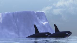 Китай насърчава по-кратък корабен маршрут през Арктика, проправен от глобалното затопляне