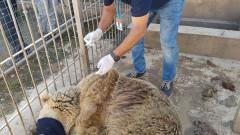 Спасяват последните оцелели животни в зоопарка в Мосул
