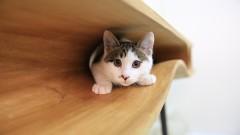 Хитър дизайн за човек и котка
