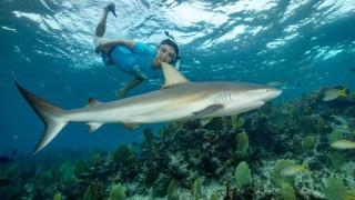 Нина Добрев плува с акули (СНИМКИ)