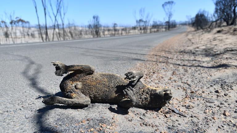 3 милиарда животни убити и разселени от пожарите в Австралия