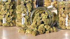 Канадска компания ще изнася марихуана, отгледана в България и Македония