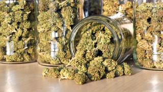 Цената на марихуаната се срина. И за някои щати това е проблем