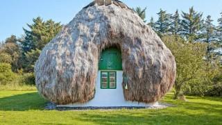 Покрив от 32 тона водорасли