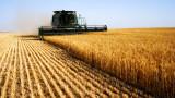 Епидемията повиши значително цените на ориза и пшеницата