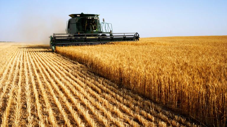 Очаква се рекордна реколта и запаси от зърно в света