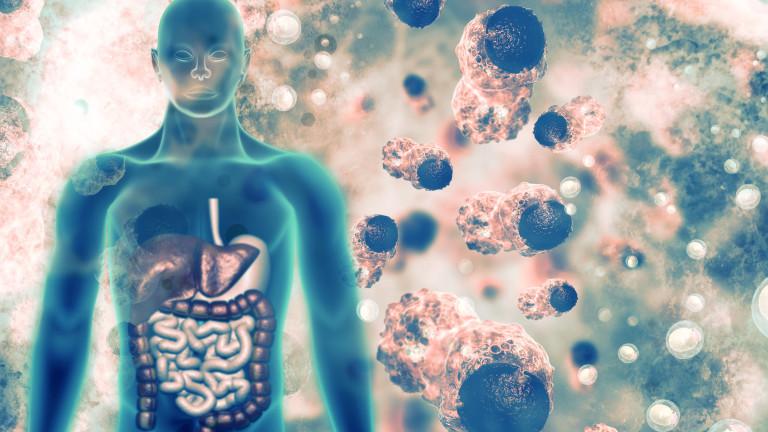 Новооткрита част от нашата имунна система може да бъде използвана