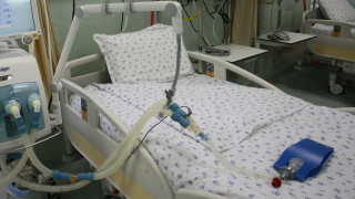 Събраха 50 хил. евро дарения за връщането на тежкоболната Теодора в България